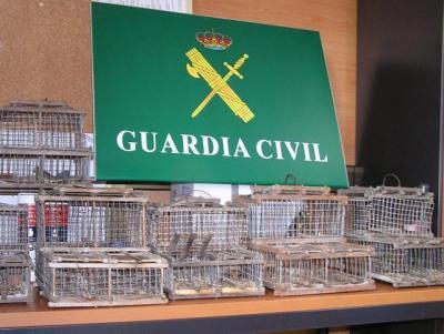 Desarticulada una red fraudulenta de aves protegidas en Canarias