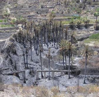 Turcón-Ecologistas en acción hace público un documento en formato PowerPoint del incendio de Gran Canaria