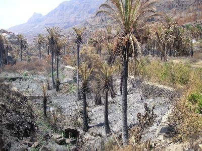 PALMERAL DE FATAGA, EN SAN BARTOLOME DE TIRAJANA