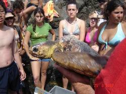Los voluntarios de los campamentos de trabajo participan en la suelta de seis tortugas en la Isla de Lobos