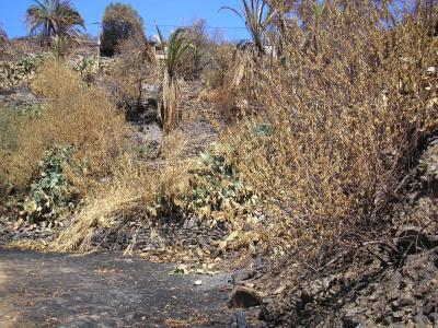 El incendio forestal de Gran Canaria afectó a 635 fincas agrícolas y ganaderas de Tejeda, San Bartolomé de Tirajana y Mogán