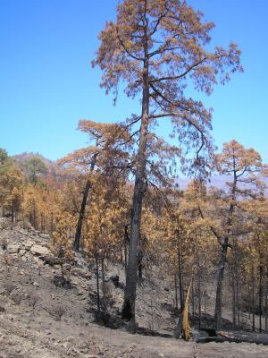 fotos incendio de gran canaria