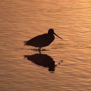 El cambio climático y la avifauna