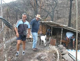 Ben-Magec entrega ganado para los campesinos afectados del incendio en Veneguera