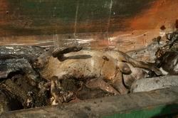 LA PLATAFORMA MÁS NUNCA CIFRA EN 12.816 LOS ANIMALES CALCINADOS POR EL INCENDIO DEL PASADO VERANO.