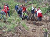 El Cabildo plantará 3.000 ejemplares de monteverde con la actividad 'Reforesta 2007'