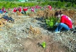 Reforestación modélica en la finca La Orilla