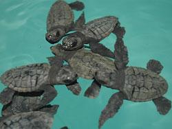 Mala gestión con la fauna marina amenazada