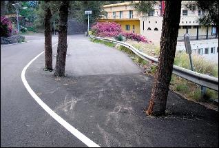 El Cabildo de Gran Canaria asfalta hasta el tronco a los árboles de nuestras carreteras