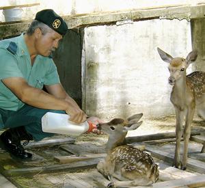 El Seprona intervino durante el pasado año 113 animales exóticos en Canarias