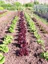 El ayuntamiento fomentará la agricultura ecológica