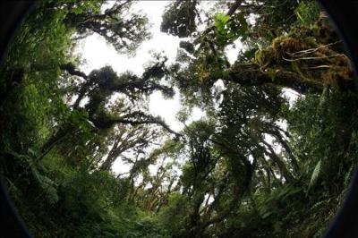 """La tala masiva del bosque boreal canadiense amenaza con ser una """"bomba de carbono"""""""