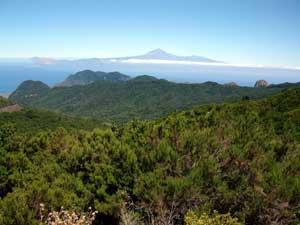 El fuego se aleja del Parque Nacional de Garajonay y queda acotado en el barranco de Los Aceviños