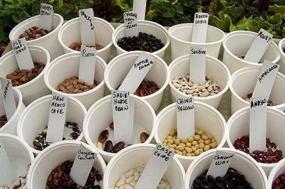 Biopiratería o el expolio de recursos tradicionales indígenas