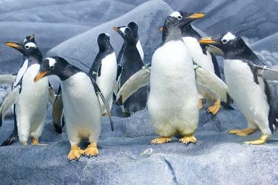 La Antártida, hábitat tóxico para los pingüinos