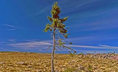 La ONU se propone plantar un árbol por cada habitante del planeta