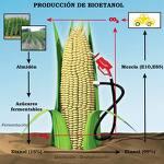 """El """"lado oscuro"""" de los biocombustibles"""