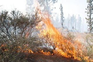 El 80% de los incendios son provocados
