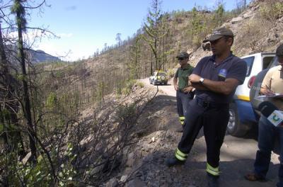 Blindaje a los pinos centenarios