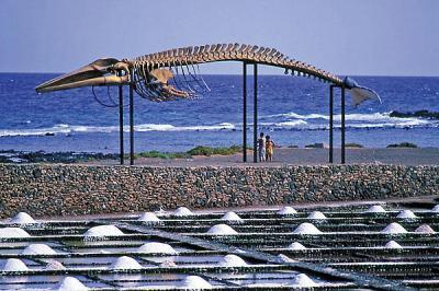 La senda de los cetáceos