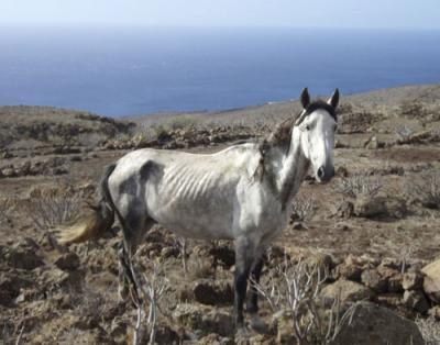 Ocho caballos se mueren de hambre y sed en La Gomera