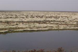No a las plantaciones de eucaliptos en Doñana