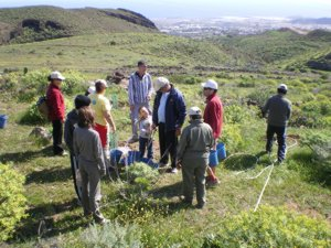 Ingenio: Doscientos nuevos acebuches se plantaron este fin de semana en la Villa