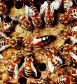 Investigadores de la UMU detectan por toda España el parásito más maligno para las abejas