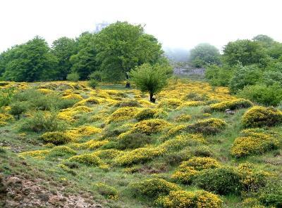 El Cabildo de Tenerife conmemora el Día Mundial Forestal con una actividad en el monte de El Sauzal