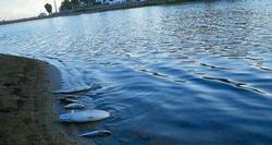 Muere el 70% de los peces de la Charca por la falta de oxígeno