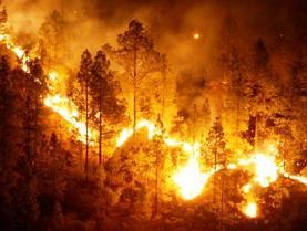 El Gobierno advierte del alto riesgo de incendio forestal en Canarias