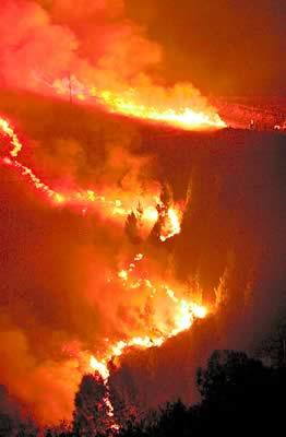 Fundación Foresta cree que tras dos años del gran incendio en Gran Canaria comienza la recuperación de montes