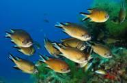 La Expedición 'Oceana' halla especies desconocidas en aguas de Canarias