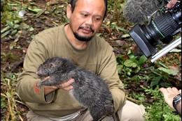 La rata gigante del volcán perdido