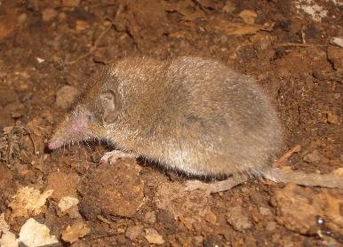 NOTA INFORMATIVA relativa al Nuevo Catálogo de Especies Amenazadas de Canarias