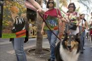 Una cadena humana formada por unas 4.000 personas rodeó el Parlamento canario para reprobar el nuevo Catálogo de Especies Amenazadas