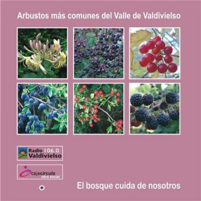 Arbustos más comunes del Valle de Valdivielso