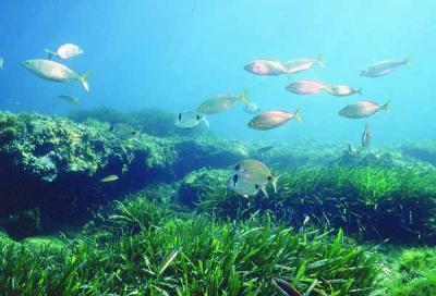UGT Canarias por la retirada de la proposicion de Ley sobre el nuevo Catálogo de Especies Protegidas