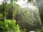 Superficie arbolada mundial decrece 16 millones hectáreas al año