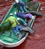 Salvar a los delfines