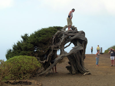 El árbol enfermo de plaga turística