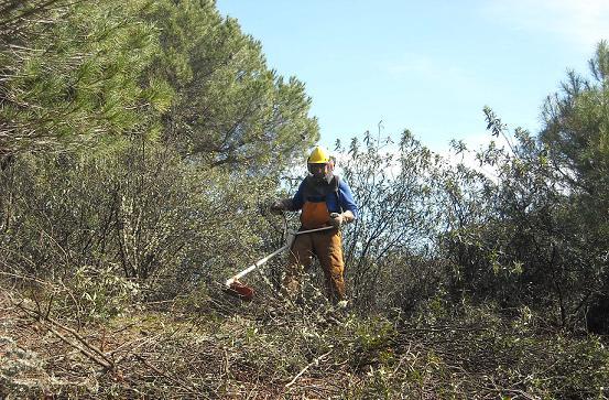 282 voluntarios sevillanos en la lucha contra los incendios forestales