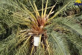Miel de palma se incluye en catálogo nacional para desarrollo rural