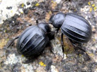 Puertos trasladará a los escarabajos