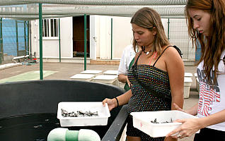 Cofete acoge el nacimiento de 102 tortugas bobas