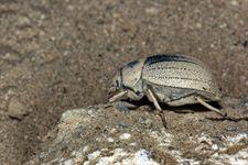 Observatorio de Granadilla 'invita' a Puertos de Tenerife a iniciar las obras tras traslado de 17 escarabajos protegidos