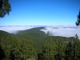 El Rosario diseña el primer parque de aventura forestal de Canarias