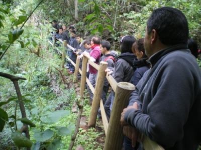 La reserva natural de Los Tilos de Moya se abre de nuevo al público