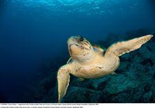 Oceana propone multiplicar por cien el área de protección de la superficie marina canaria para cumplir con la legalidad