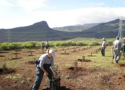 Concluyen 6 meses de trabajos de FORESTA y el SCE para mejorar los bosques de Gran Canaria